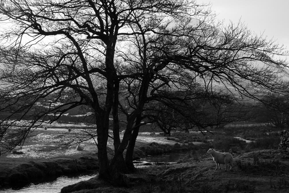 Hermione McCosh Photography- Cumbrian Landscapes