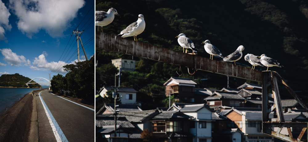 Seagulls in Japan - Hermione McCosh Photography